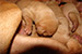 Puppies: The litter J